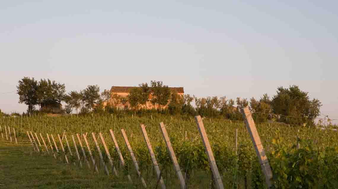 Bucci Winery