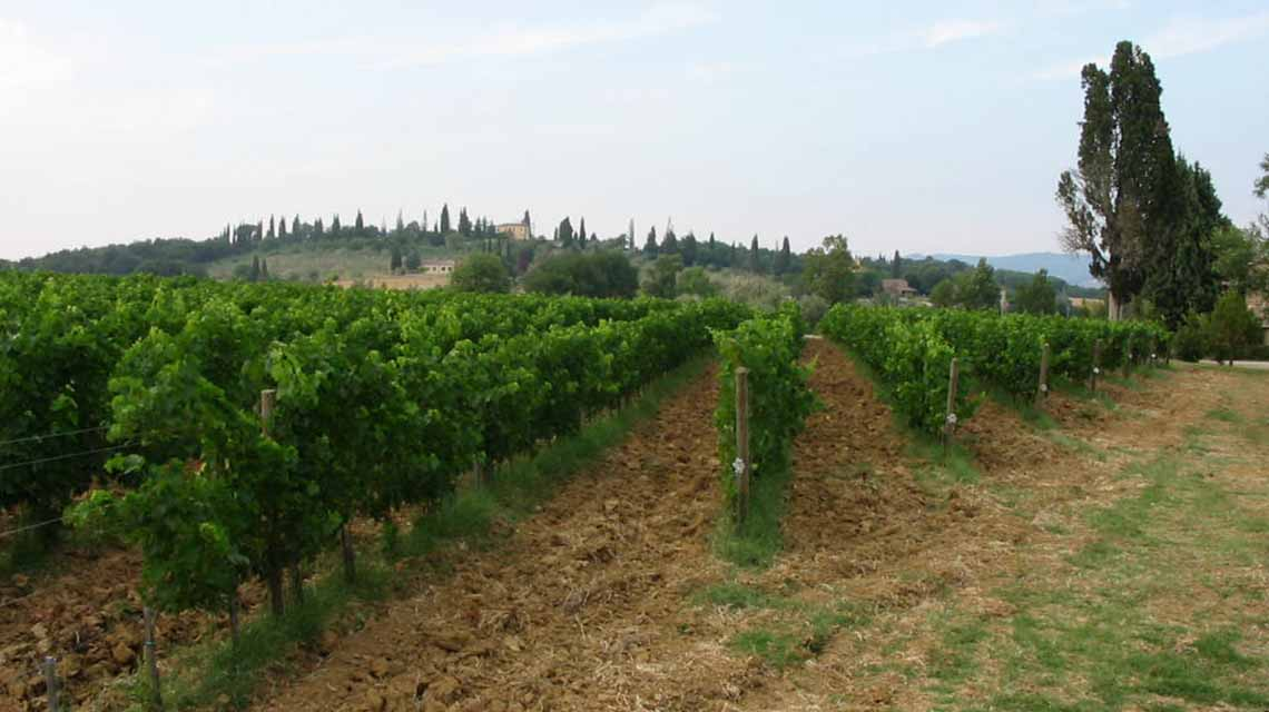 Carpineta Fontalpino vineyards