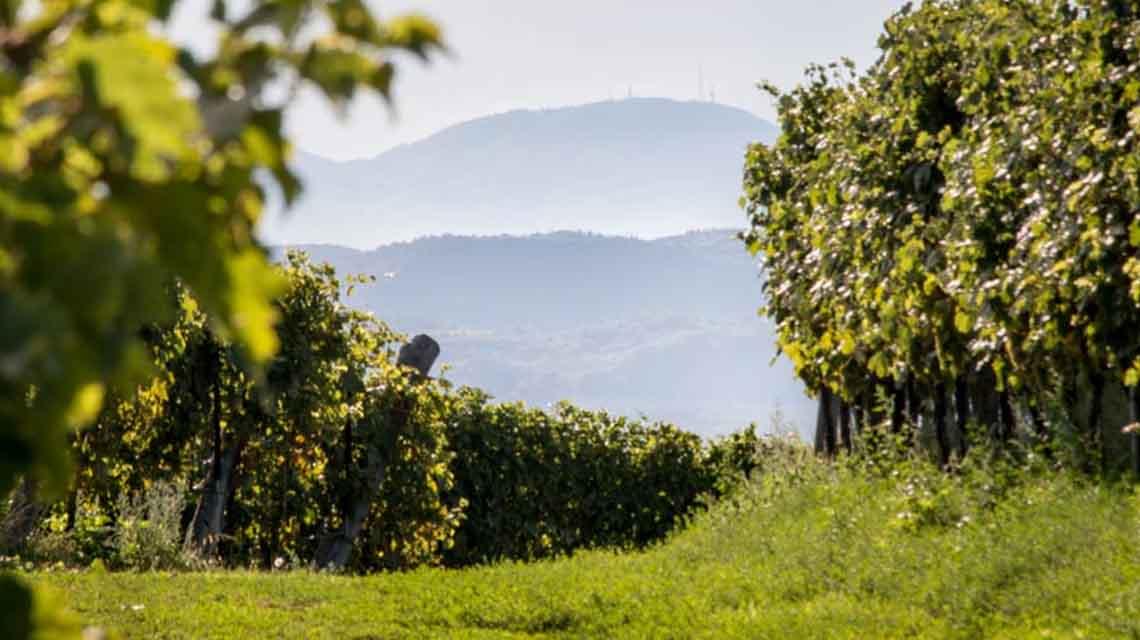 Corte Giacobbe Vineyards