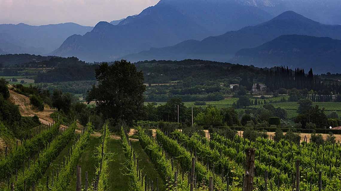 Costaripa vineyards