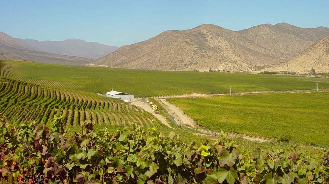 Falernia Vineyards