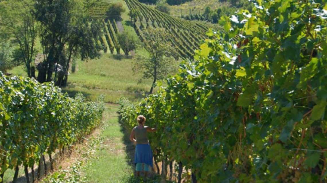 Gaudio Bricco Mondalino Vineyards