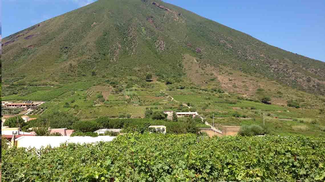 Hauner Vineyards