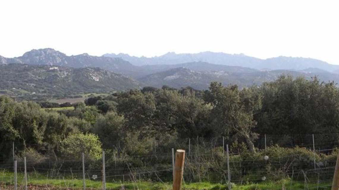 Mt. Limbara