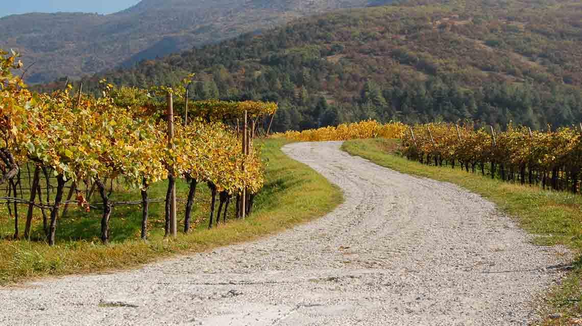 Lagaria Vineyards