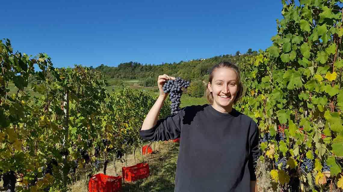 Marcarini Harvest