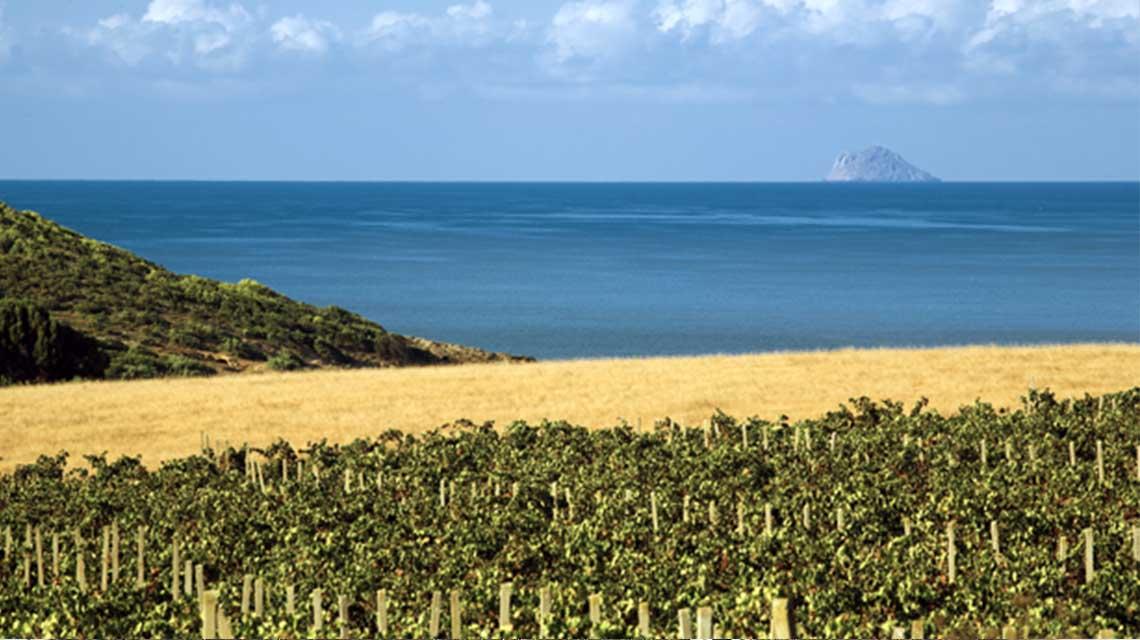 Santadi's Seaside Vineyards