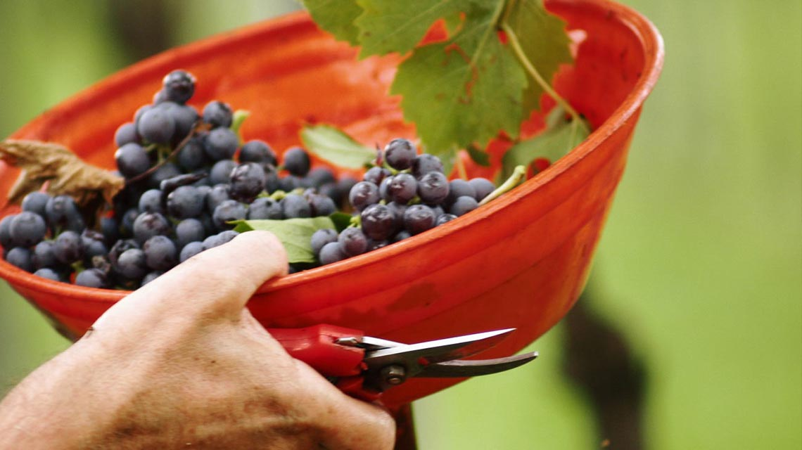 Speri Harvest