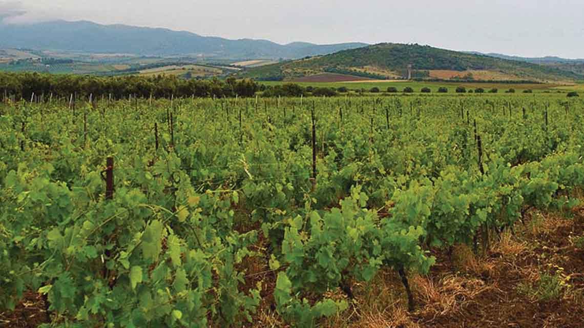 Wild Sardinia Vernaccia Vineyards