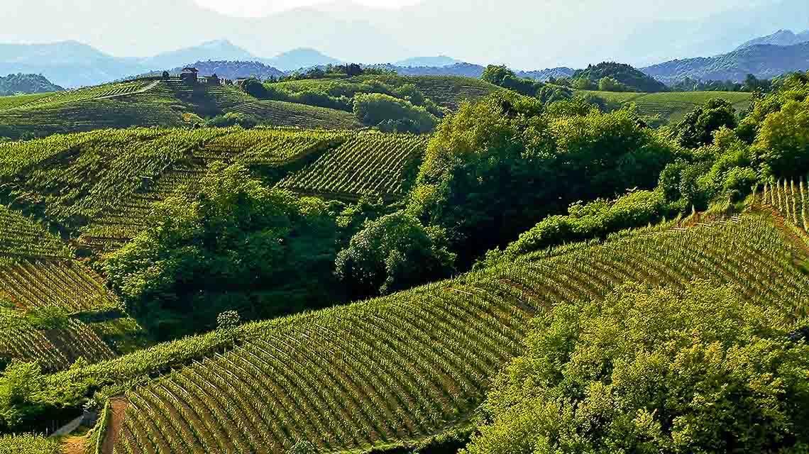 Torraccia's Gattinara Vineyard