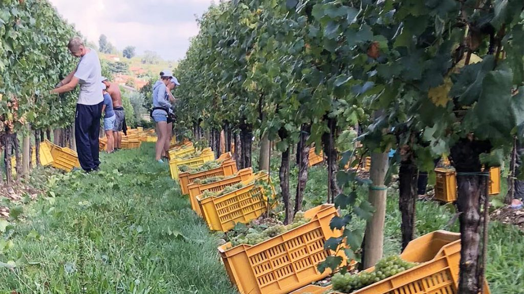 2019 Harvest Report: Lombardy